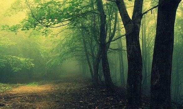 Piękny las.