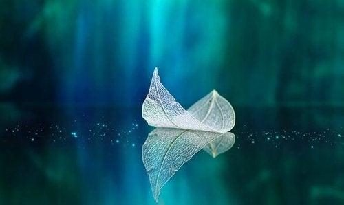 Liść unoszący się na wodzie
