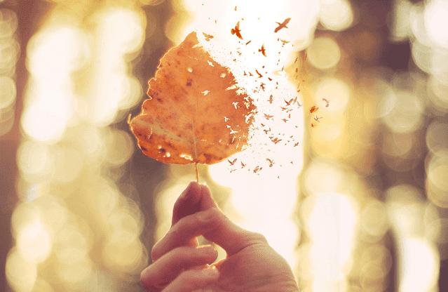 Dłoń z jesiennym liściem