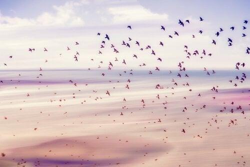 Życie - niebo i ptaki