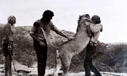 Przywitanie lwa i ludzi