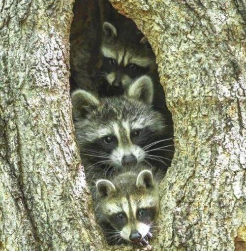 Rodzina zwierząt