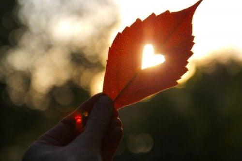 Serce z liścia