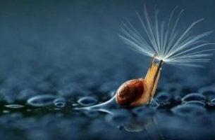 Ślimak z kroplami deszczu