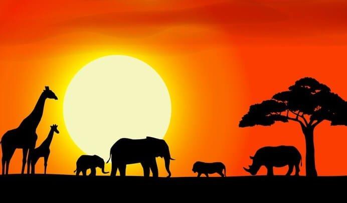 zwierzęta o zachodzie słońca