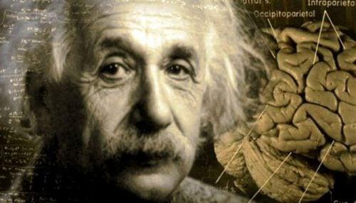 Albert Einstein i niesamowita historia jego mózgu