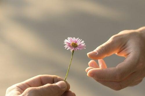 dłoń z kwiatem