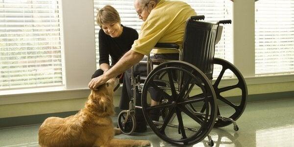 Dogoterapia - terapia z udziałem zwierząt