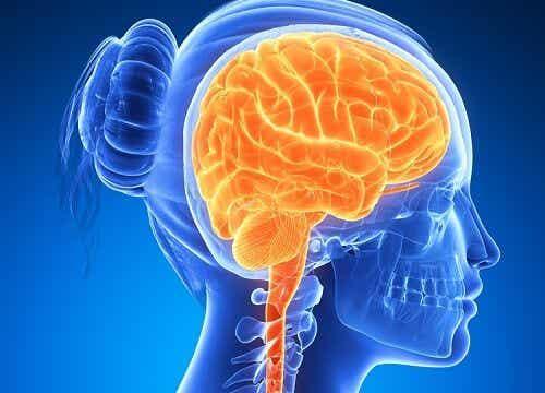 Czy mózg mężczyzny różni się od kobiecego?