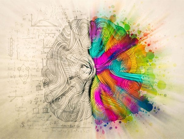 Dwie półkule mózgu.