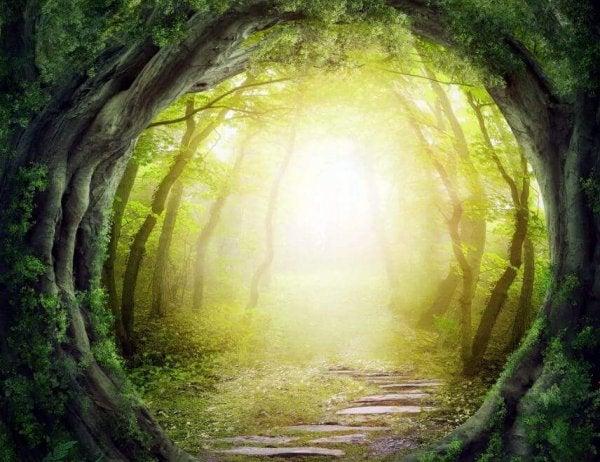Ścieżka w lesie.