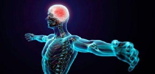 Mózg sportowca