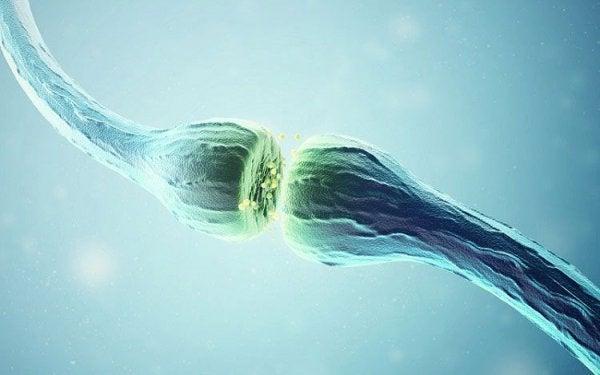 Komunikacja między neuronami