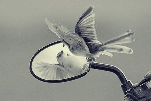 Zdradliwe ego, które odcina nas od wolności i rozwoju
