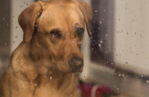 Pies smutnie patrzy przez okno