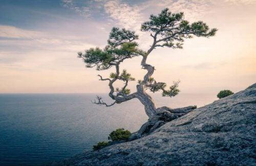 samotne drzewo na klifie