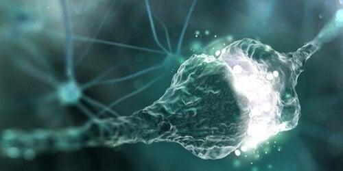Szczelina synaptyczna - czy wiesz, czym jest?