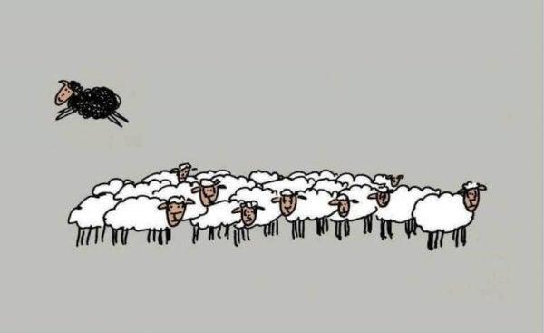 Czarna owca skacząca nad białymi