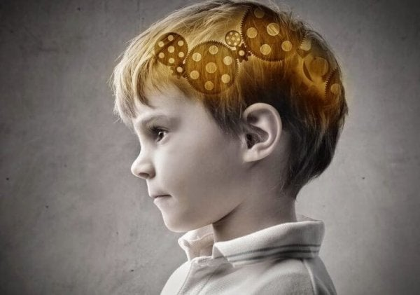 mózg chłopca - kora przedczołowa