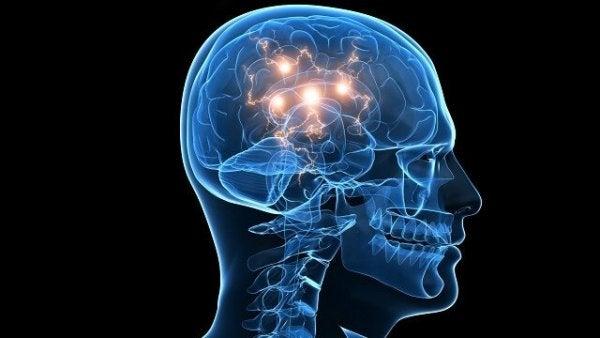 Mózg - atrakcyjność