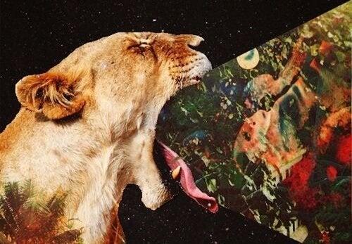 tygrys jedzący obraz