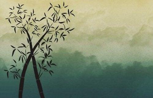Bambus - czego się od niego możemy nauczyć o szczęściu?