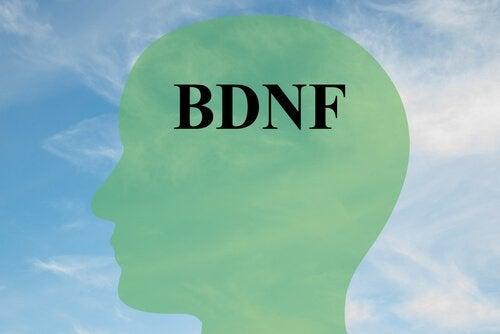 Jak zwiększyć BDNF, kluczowe białko dla zdrowego mózgu