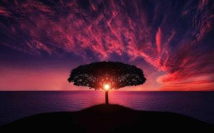 drzewo na wyspie