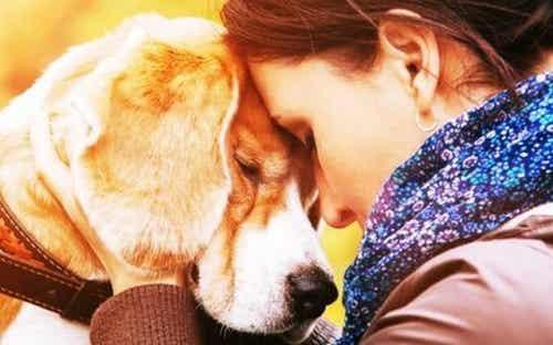 Zwierzęta - dlaczego tak bardzo je kochamy?