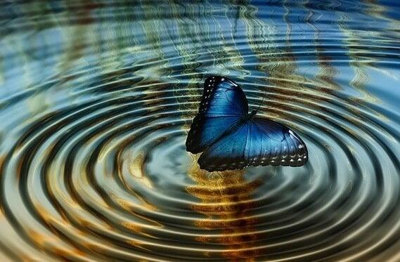 motyl na wodzie
