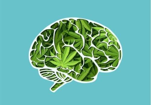 Długotrwałe skutki marihuany na mózg