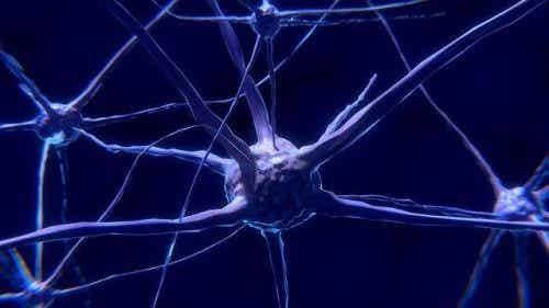 Neurony: co to jest i na czym polega ich działanie
