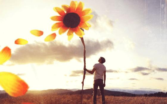Mężczyzna trzyma wielki słonecznik