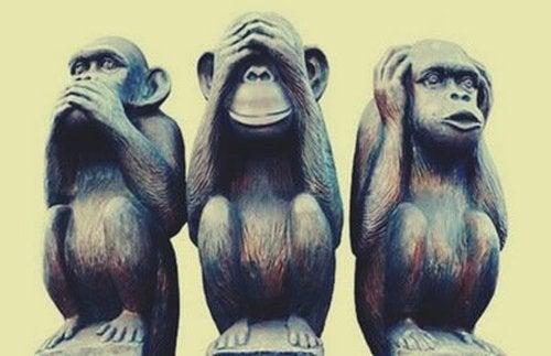 Trzy małpy – znana metafora i jej ciekawe znaczenie