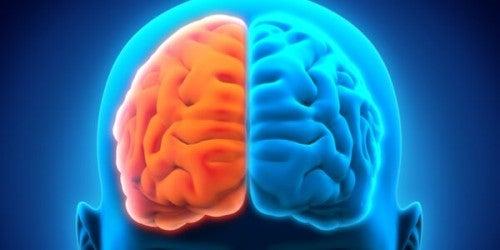 Półkule mózgu