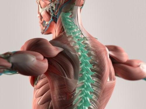 Płyn mózgowo-rdzeniowy: podstawa centralnego układu nerwowego