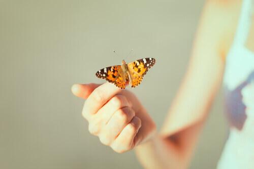 Kreatywna beznadzieja - Motyl na dłoni