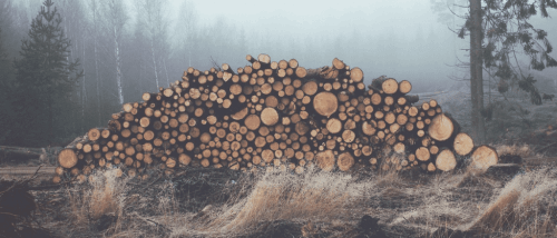 Ułożone kłody w lesie