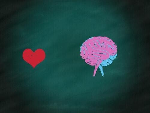 Mózg: część racjonalna i emocjonalna oraz ich współpraca