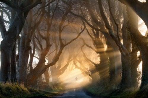 postać w lesie