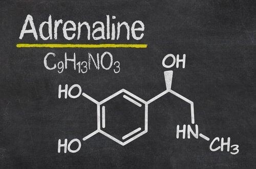 Adrenalina - reakcja na stres