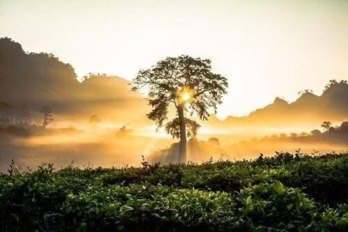 Drzewo o wschodzie słońca