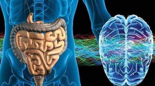 Jelitowy układ nerwowy: drugi mózg człowieka
