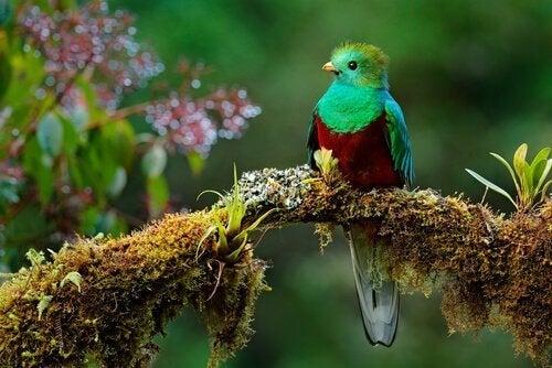 Legenda o ptaku Toh: czyli starożytna lekcja pokory dla nas wszystkich