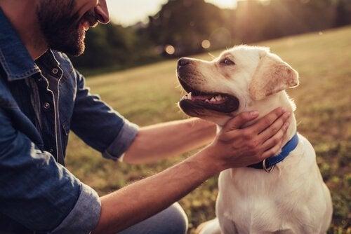 Psy, które tworzyły historię - z pewnością o wielu z nich nigdy nie słyszałeś!