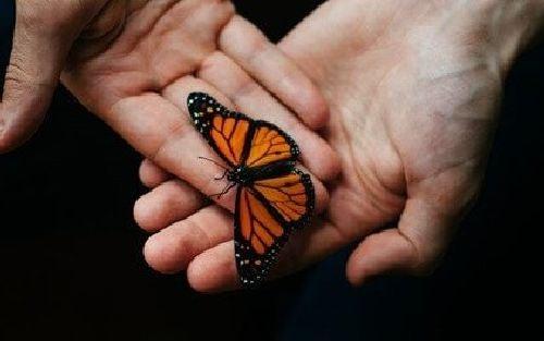 Motyl w dłoniach