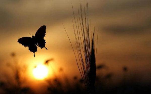 Motyl i zachód słońca