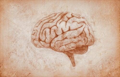 Mózg, a psychologia eksperymentalna