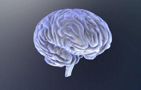 Mózg człowieka