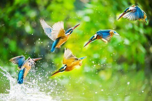 Ptaki w wodzie
